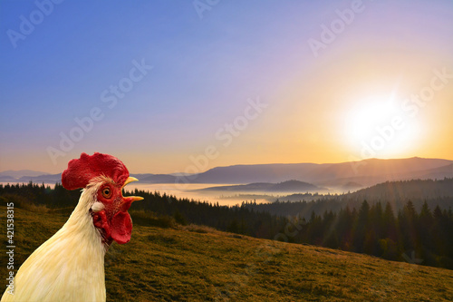 Leinwand Poster a rooster singing at sunrise