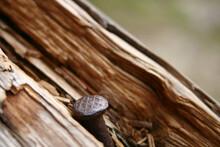 Ein Rostiger Nagel Steckt In Einem Altem Und Verwitterten Holzzaun