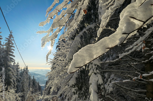 Photo First sunbeams shining through the branches at the top of snow covered peak of Schoeckl, Austrian Alps
