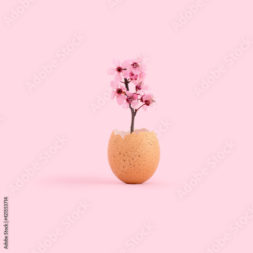 Fototapeta Creative Easter and spring time concept with flowers in the eggshell on pinky background obraz