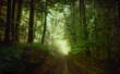 canvas print picture - Morgenstimmung im Frühlingswald, Bayern, Deutschland, Europa