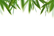 canvas print picture - Bamboo green fresh leaves border