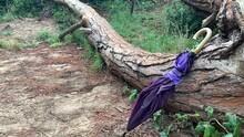 Paraguas Violeta Abandonado Sobre árbol Caído -  Abandoned Violet Umbrella Over Fallen Tree