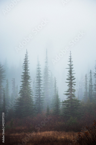 Trees In Foggy Weather Fototapet