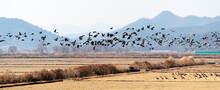 Flock Of Birds Flying Over Land