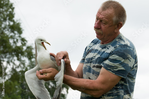 Fotografie, Obraz a man holding a seagull with a sick wing