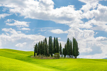 Fields With A Grove Of Cypress Trees Against The Summer Sky