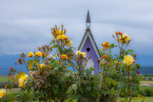 USA, Sequim, Washington State, Field Of Lavender And Lavender Painted Wood Birdhouse And Yellow Roses