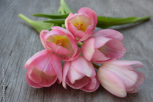 Fototapety, obrazy: A bunch of pink tulips on weathered wood.