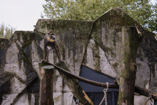 African Mandrill On A Mast At ARTIS Zoo In Amsterdam, Netherlands
