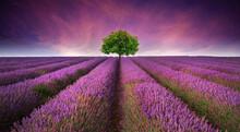 Stunning Lavender Field Landscape Summer Sunset With Single Tree On Horizon