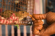 Close-up Of Hand Feeding Squirrel In Cage