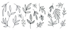 Graphic Plant. Linear Botanical Nature Element. Vector Design. Spring And Summer Concept. Minimalism Graphic Drawing.