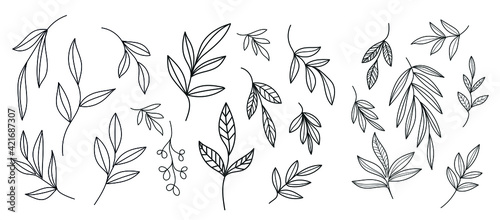 Fototapeta Graphic plant. Linear botanical nature element. Vector design. Spring and summer concept. Minimalism graphic drawing.  obraz