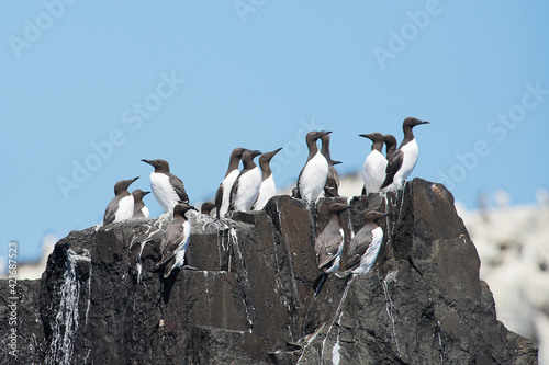 Low Angle View Of Birds Perching On Rock Fototapet