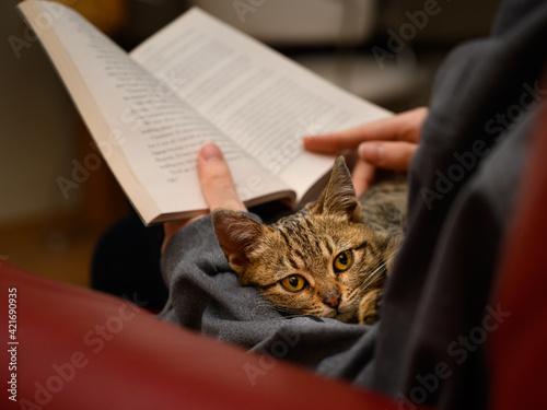 Midsection Of Person Holding Cat On Book Tapéta, Fotótapéta