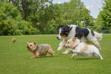 Archie, Billy And Bertie Chasing The After The Same Ball, Pure Carnage
