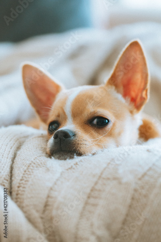 Fotografia Portrait Of Dog Relaxing On Bed At Home