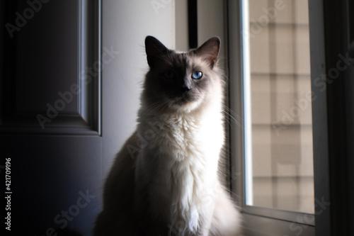 Close-up Portrait Of A Cat Tapéta, Fotótapéta