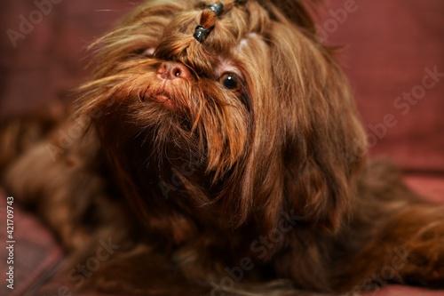 Fényképezés Close-up Portrait Of A Dog