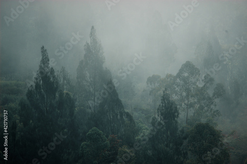 Papel de parede Trees In Forest During Foggy Weather