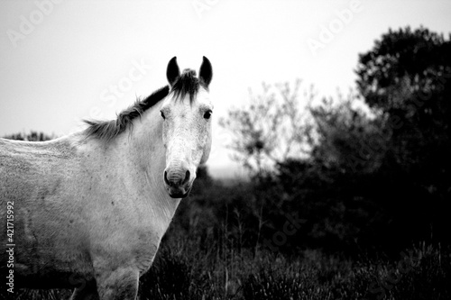 Fototapety, obrazy: Portrait Of Horse Standing On Field Against Clear Sky