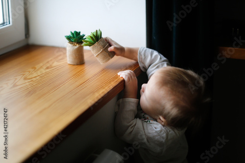 Fototapeta Caucasian baby toddler plays with flowers of succulents on the windowsill, stretches with pots of flowers. Baby safety at home obraz
