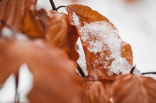 Closeup Macro Of Autumn Leaves Covered In Snow