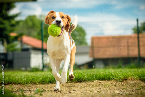 Fotografia Portrait Of A Dog On Field