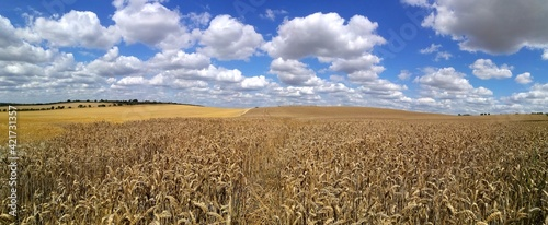 Photo Crop Fields On Sunny Day With Blue Sky And Clouds