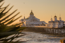 Eastbourne Pier At Sunrise With A Palm Tree Branch In The Foreground
