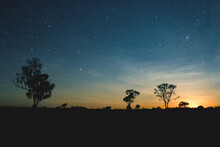 Silhouette Trees On Field Against Sky At Night. Starry Night Sky After Sunset.