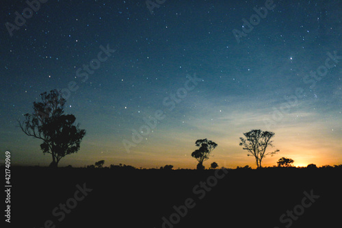 Fotografia Silhouette Trees On Field Against Sky At Night