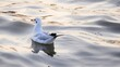 White Seagull Swimming In Lake