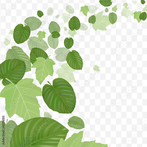 Foto Flying realistic green leaves on transparent background