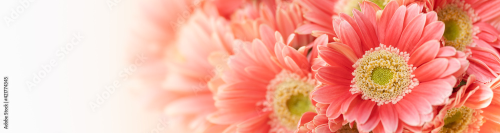 Fototapeta Nature of pink flower in garden using as background natural flora cover page or banner design