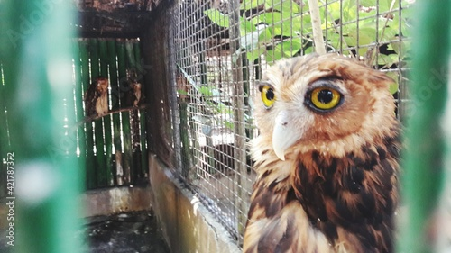 Close-up Portrait Of Owl In Cage Fototapet