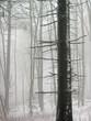 canvas print picture - Verschneite Baeume im Wald