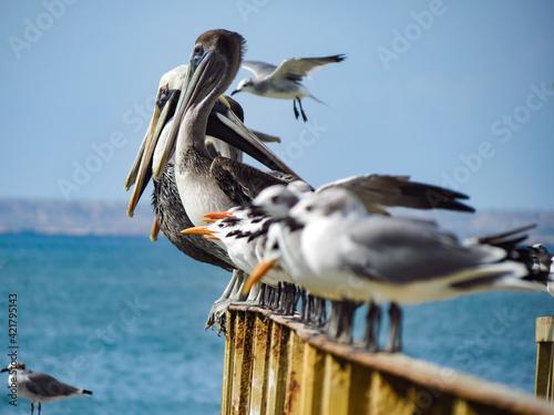 Billede på lærred Seagulls Perching On Wooden Post In Sea Against Sky