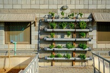 Potted Plants In Balcony Against Building