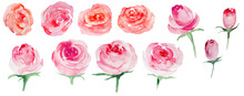 Watercolor Pink Flowers Illustrations