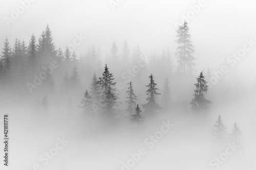Papel de parede Abstract Landscape In The Mountains, With Fog In The Forest, In The Morning In R