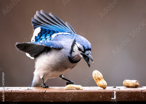 Close-up Of Bird Eating Nuts On Railing Fototapet