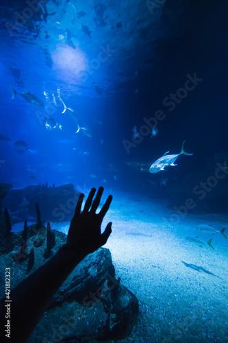 Canvas Silueta de mano en un acuario