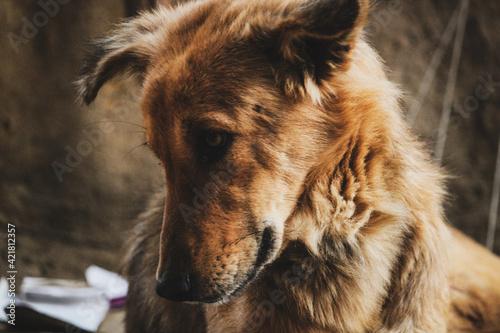 Vászonkép Close-up Of Dog Looking Away