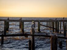 Pelican Sitting On An Abandon Pier