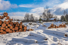 Pile Of Cut Logs Covered With Snow