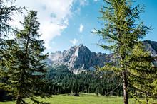 Cima Dolomitica Vista Tra Due Alberi
