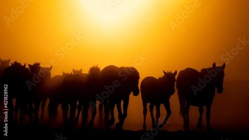 Obraz Silhouette Horses On Field Against Orange Sky - fototapety do salonu