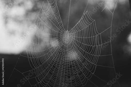 Papel de parede Close-up Of Spider Web